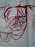 coronaryv1.jpg